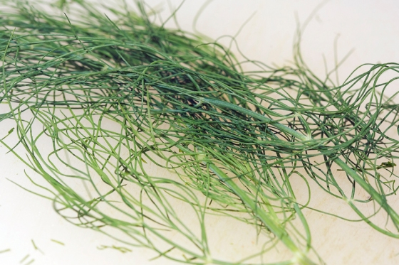 Sprig of fresh dill on cutting board
